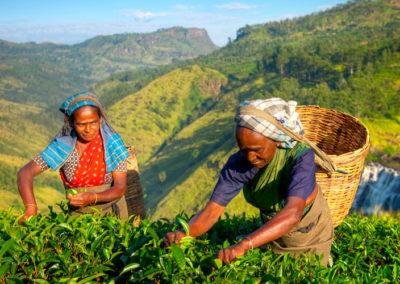 Sri Lanka Household Income and Expenditure Survey