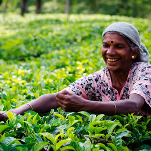 Sri-Lanka-Household-Income-and-Expenditure-Survey-GAL2
